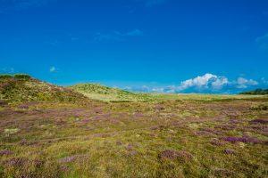 Landschaft auf Tresco, Scilly Inseln