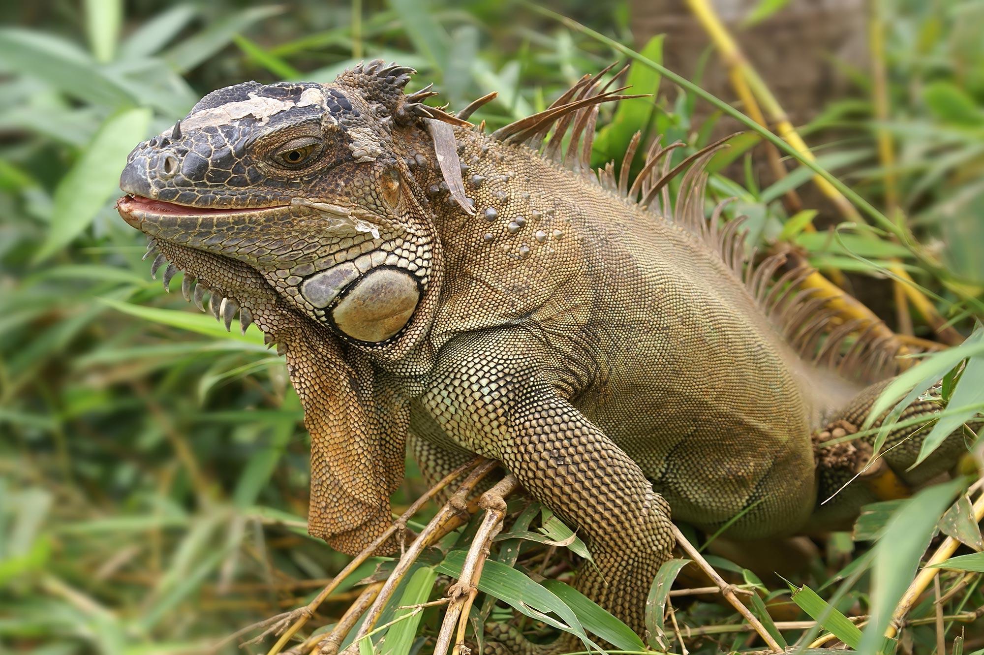 Iguana Farm -Alle Reisen