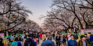 Sakura Festival in Tokio
