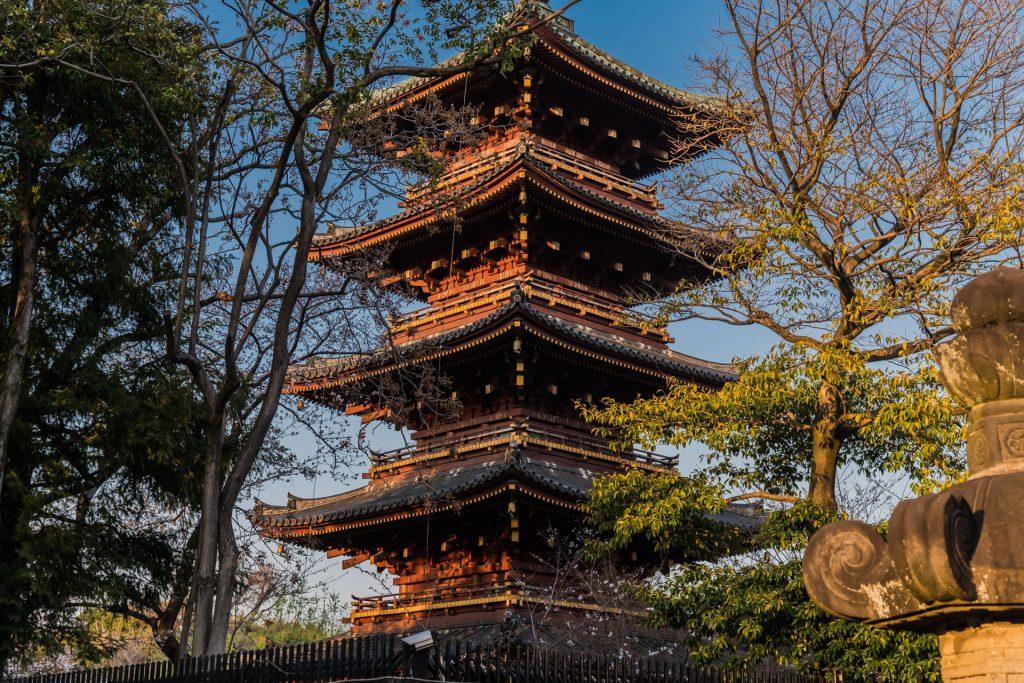 DSC 1715 -Das Erwachen der Kirschblüte in Tokio