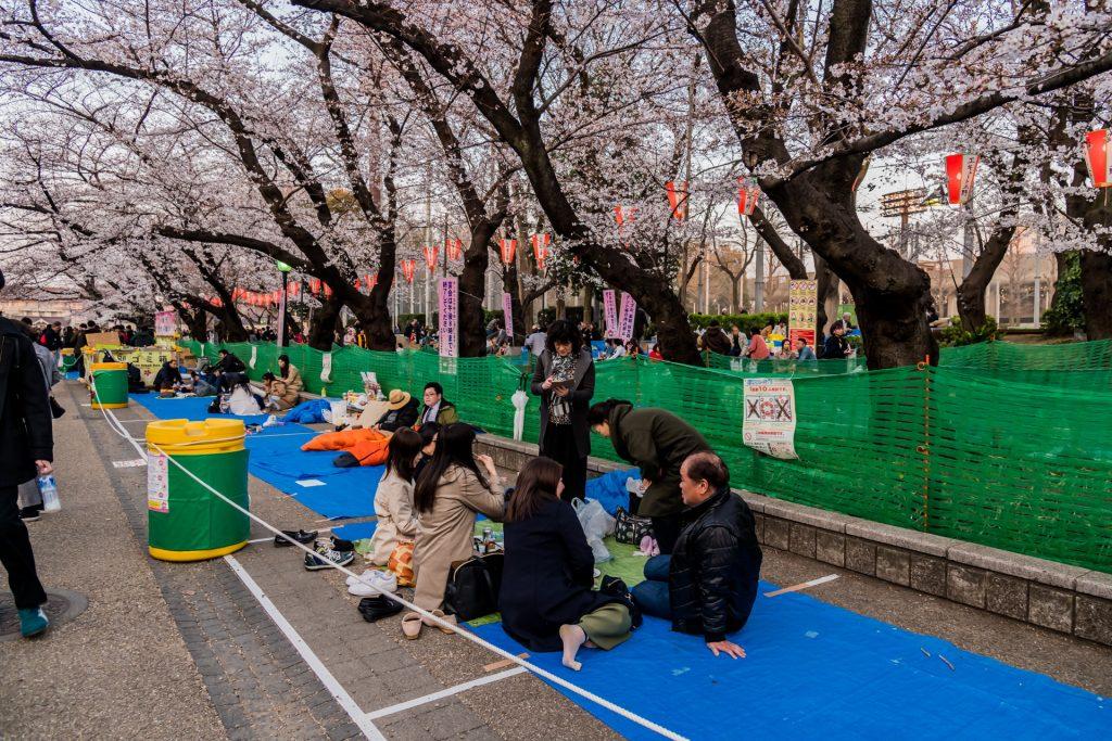 DSC 1749 -Das Erwachen der Kirschblüte in Tokio