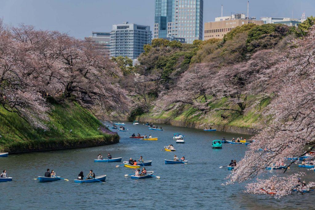 Kirschbüte im Stadtteil Chidorigafuchi in Tokio