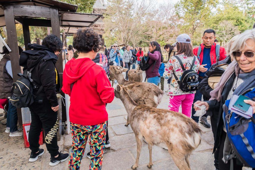 Schikarhirsche in Nara