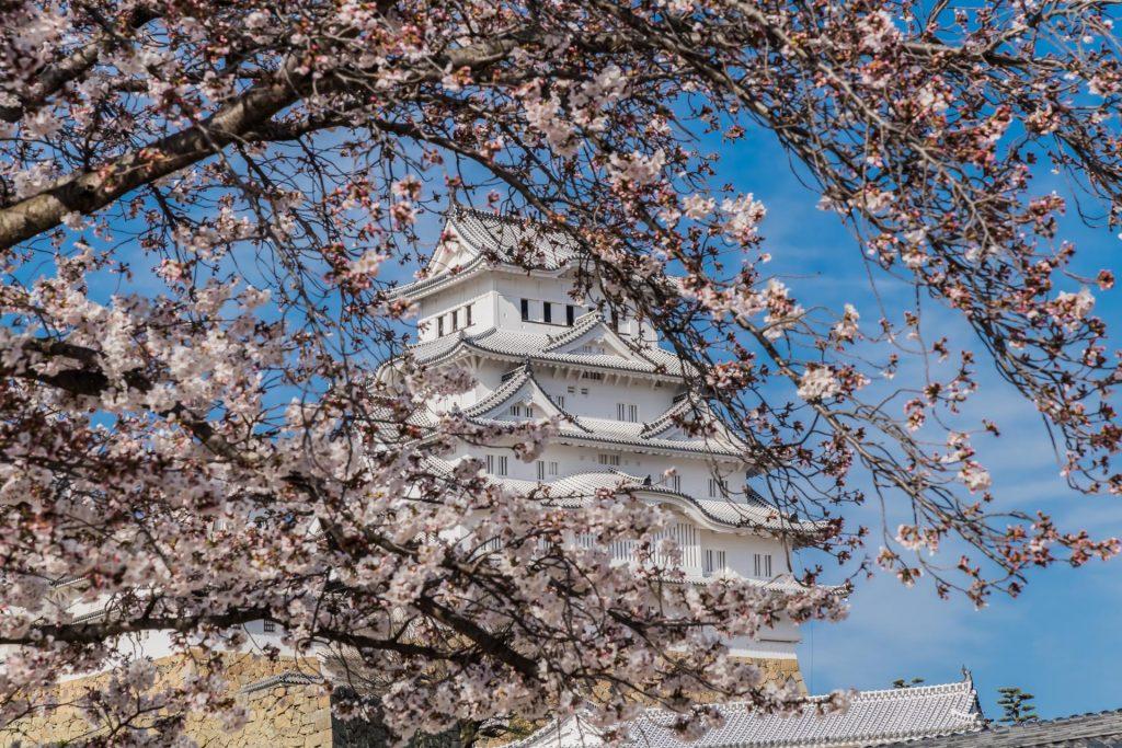 Himeji Castle in der Kirschblüte