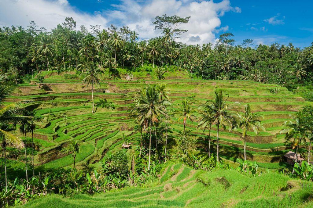 Tegalalang auf Bali