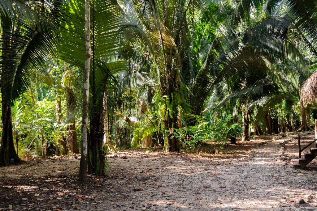 Regenwald in Belize