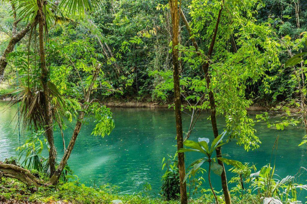 Tropische Pflanzen am Blue Creek