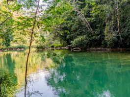 Der Blue Creek in Belize