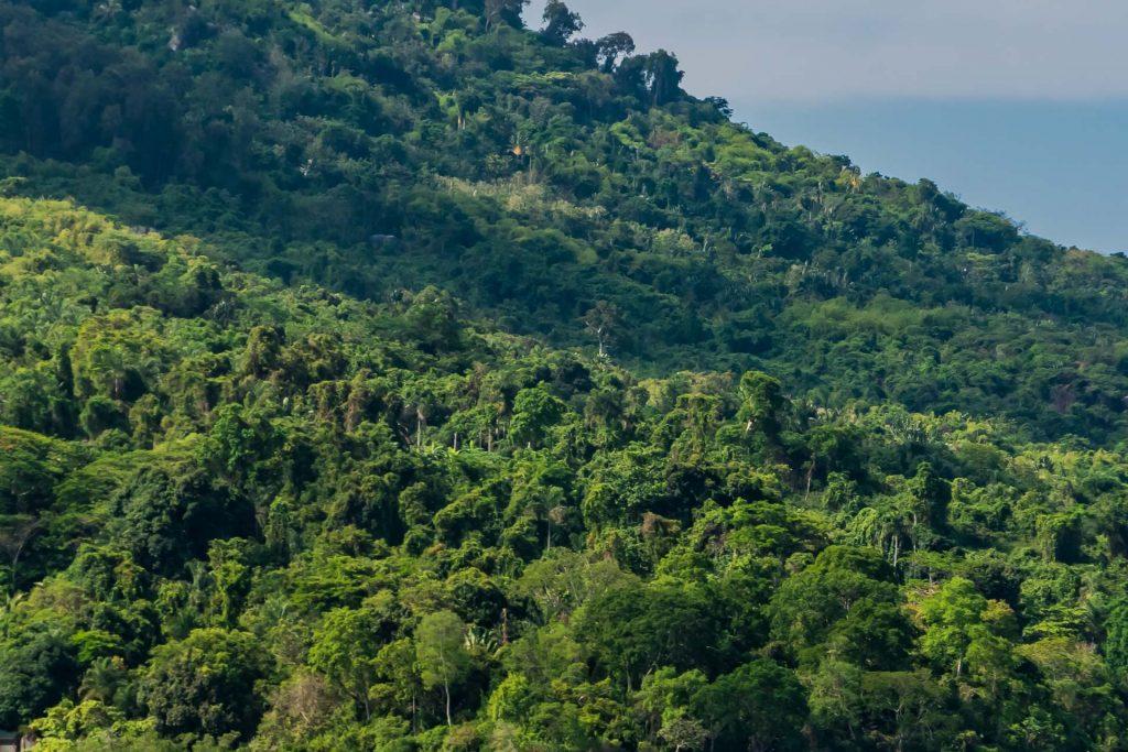Regenwald auf Nosy Komba in Madagaskar