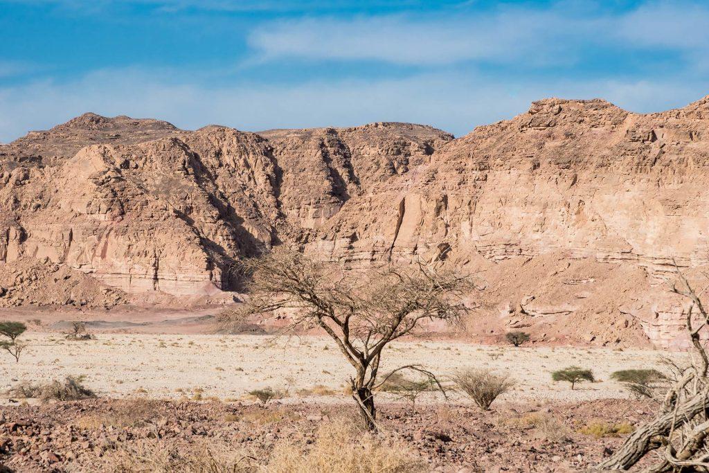 Baum im Timna Nationalpark in Israel