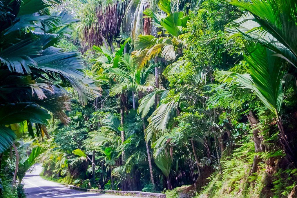 Landschaft am Vallée de Mai auf Praslin