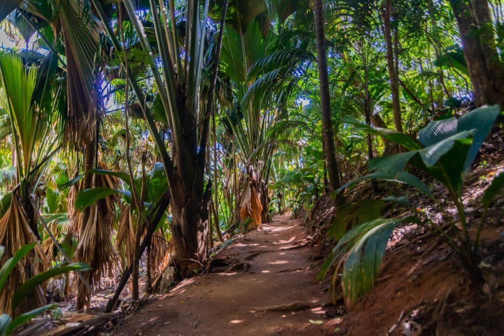 Weg durch das Vallée de Mai auf Praslin