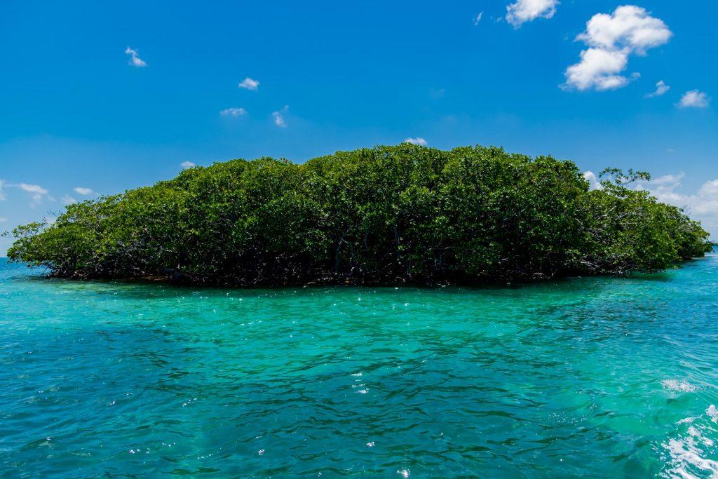 Mangroven auf einer Insel im Belize Barrier Reef